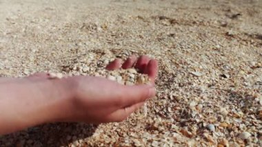 A mans hand takes seashells, sand on the beach — Stock Video
