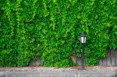 A fence made of wood, vines and lantern — Stock Photo