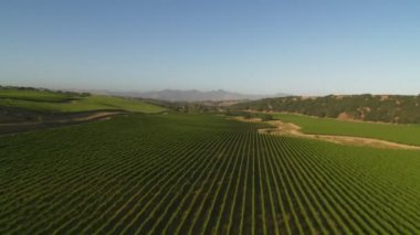 Santa Barbara County vineyards — Stock Video