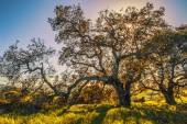 Regional Park in Northern California — Stock Photo