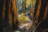 Nature Trail in Northern California — Stock Photo