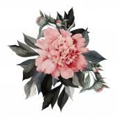 Watercolor Bouquet of peonies — Stock Photo