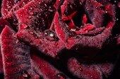 Flor color de rosa — Foto de Stock