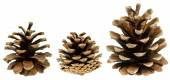 Set of cones isolated on white — Stock Photo