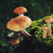 Mushrooms on green stump in summer forest — Stock Photo #66001191