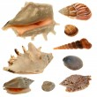 Seashell collection isolated on the white background — Stock Photo #66647993