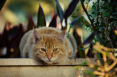 Cat Face, Cat, Cat Eye, Kitty, Cat Closeup, Cat Isolated, Cat Head — Stock Photo