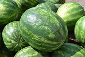 Water-melons on a counter — Stock Photo