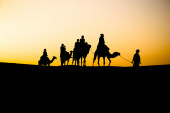 Berbers on camels in the desert — Stock Photo