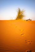 Sandy desert landscape — Stock Photo