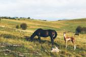 Pferd Essen Gras in den Bergen — Stockfoto