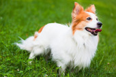 Beautiful dog on the grass — Stock Photo