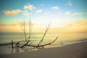 Sea shore in the Florida — Stock Photo