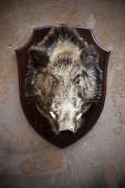 Wild boar head on the wall — Stock Photo