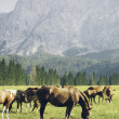 Horses graze in the mountains — Stock Photo #72034339