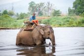 Thai mahout riding an elephant walking in the river. — Photo