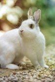Rabbit in the garden — Stock Photo