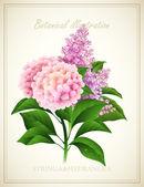Syringa and Hydrangea. Botanical Vector illustration — Stock Vector