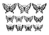 Set of wonderful butterflies — Stock Vector