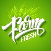Farm Fresh, calligraphic inscription. Vector illustration — Stock Vector