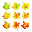 Set of colorful autumn leaves. Vector illustration. — Stock Vector #78452988