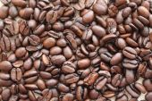 A lot of coffee beans — Stock Photo