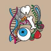 Identification organs color — Stock Vector