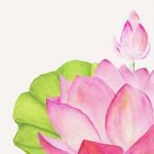 Flor de lótus — Fotografia Stock