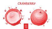 Fruits set - cranberry — Stock Vector