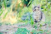 Kitten hiding in the foliage looks a small prey immobile — Stock Photo