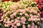 Beautiful bouquet of pink roses — Stock fotografie
