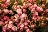 Beautiful bouquet of pink roses — Zdjęcie stockowe