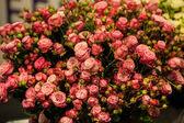 Lindo buquê de rosas — Fotografia Stock