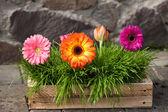Gerbera flores em um vaso de madeira na pedra de parede plano de fundo — Fotografia Stock