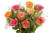 Beautiful Roses — Stock Photo