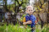 Little boy planting and gardening tomato seedlings — Stock Photo