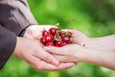 Hands of bride and groom holding a handful of cherries with wedd — Stock Photo