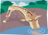 Giraffe drinking — Stock Vector