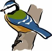 Sketchy Blue Tit — Stock Vector