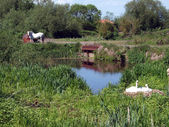 Swan's nest and white shire horse — Stock Photo