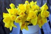 Daffodil — Stock Photo
