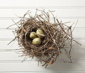 Eggs in Nest on Wood — Stock Photo