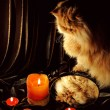 Cat looking at his reflection in the mirror. Merry Christmas — Stock Photo #66058683