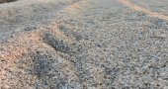 Zebra Mussel Shell Shore — Stock Photo