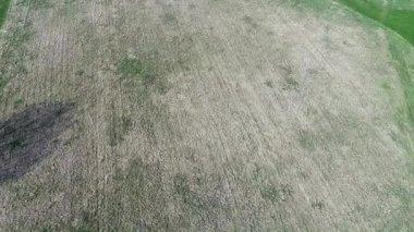Aerial agriculture farm field landscape — Vídeo de Stock