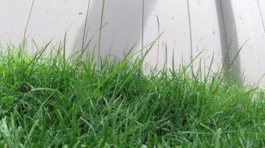 Lawn trimmer cutting long grass — Stock Video