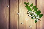 White flowers - locust tree flowers on ash background — Stock Photo