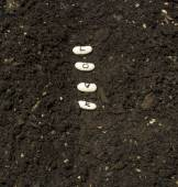 Planting Seeds Of Love In A Garden Row — Stock Photo