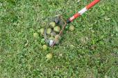 Special Tool To Pick Up Walnuts — Stock Photo