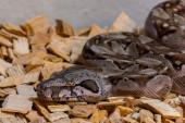 Small snake — Stock Photo